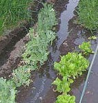 gardenCrop